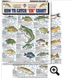 How To Catch EM Freshwater Chart #3 Sunshine Bass, Spotted Bass, Spotted Sunfish, Warmouth, Largemouth Bass, Flier, Redear Sunfish, Black Crappie, Oscar, Redbrested Sunfish, Bluegill, Shad, Suwannee Bass, Butterfly Peacock Bass, Redeye Bass and more. Only $2.99