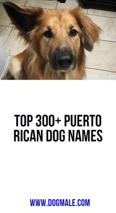Top Puerto Rican Dog Names Puerto Rican Names, Dog List, Puerto Ricans, Dog Names, Dogs, Doggies, Pet Dogs