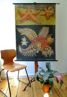 Starfish Education Chart - Jung Koch Quentell