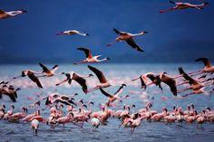 Lake Bogoria National Reserve, Kenya, 1st week of Deceber
