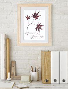 Pressed leaves. Herbarium. Nature art. Botanical picture.