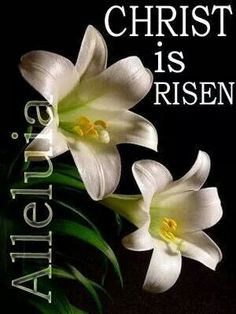 Christ is Risen! He is Risen indeed! Easter History, He Is Risen Indeed, Resurrection Day, Christian Images, Christian Quotes, Christian Faith, Christ Is Risen, Easter Pictures, Lily Pictures