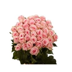 Send roses on Valentine's Day! You will receive four bunches of 25 pink roses each. They can all be the same or different shades of pinks. Your flowers and Graceful Pink Roses are shipped absolutely fresh, direct from the greenhouses to you via FedEx. GlobalRose sells wholesale flowers and Wholesale Graceful Pink Roses at prices that are usually lower than most local wholesalers.