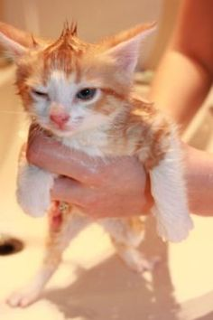 sologatos: 24212 First bath. Not impressed. ...