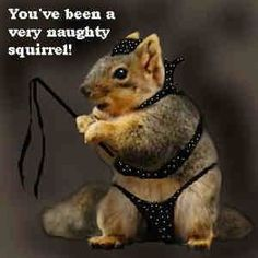 Dressed Up Squirrels | few random funny squirrel pictures for a lazy Sunday morning!