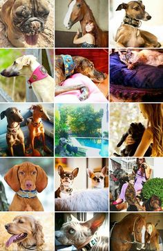 Buy Dog Collar,Dog Clothes and Dog Accessories Unique Dog Collars, Dog Accessories, The Struts, Your Dog, Pets, Cloths, Stuff To Buy, Style, Drop Cloths