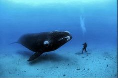 INDONESIA SPEARFISHING ADVENTURE: Talented underwater Film Maker and Photographer