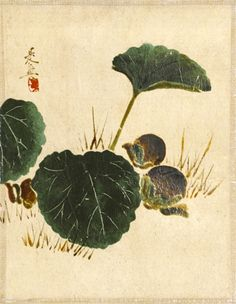 Shibata Zeshin, Eggplants