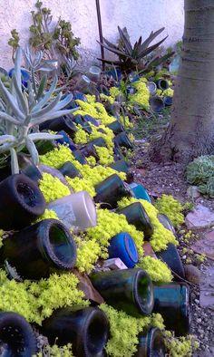 aménager-jardin-pente-douce-plantes-succulentes-extérieur