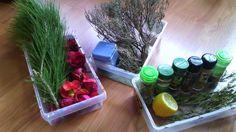 Actividades para el primer ciclo de Educación Infantil: Taller de aromas