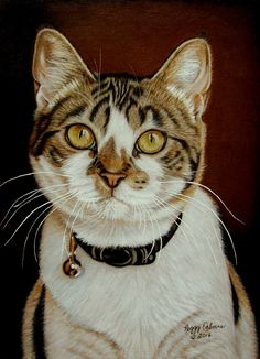 Zoe by anniecanjump | 8x10 on orange colored mat board. Done with 99% Prismacolor colored pencils, solvent for the background and white acrylic for the whiskers.  Reference photo courtesy of owner.