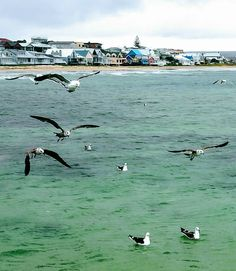 Seaside Towns, Hidden Treasures, Africa Travel, South Africa, Coast, History, Animals, Historia, Animales