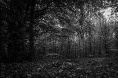 Forest, Wald, Germany, Black and white, Logo, artwork, design, grafik   Peter Möller