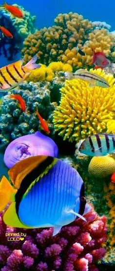 Summary: Many people are delighted by keeping live and colorful tropical fish at their home. Countless species of fish are kept at home as pets. There are several Tropical fish online stores that sell tropical fish online. Life Under The Sea, Under The Ocean, Sea And Ocean, Underwater Creatures, Underwater Life, Ocean Creatures, Poisson Mandarin, Fauna Marina, Beautiful Sea Creatures