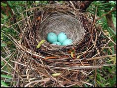 Such a Beautiful and Amazingly built nest !