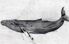 humpback whale drawing black and white - Google Search