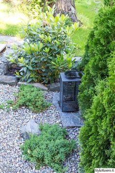 piha,istutus,rododendron,liuskekivi,koristekate