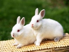 I found very sweet rabbit photos for you. I had so much fun preparing photos. I share with you the beautiful and sweet rabbits in this photo gallery. Animals Images, Animals And Pets, Cute Animals, Unique Animals, Amazing Animals, Animals Beautiful, Beautiful Creatures, Albino Rabbit, Rabbit Wallpaper