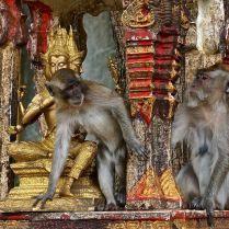 Monkeying around at Buddhist temple in Thailand. Trueworldtravels.com