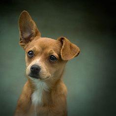 love those big ears