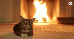 You will probably stare at this GIF of the crackling fire and Lil' Bub longer than you'd care to admit. | PetNook.in #PetNook