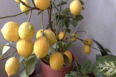 Garden Online, Balcony Garden, Growing Vegetables, Yolo, Indoor Plants, Farmer, Diy And Crafts, Fruit, Flowers