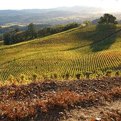 Napa vs. Sonoma face-off!      Sonoma or Napa?  Two rivals slug it out over which wine country has the juice.    sunset.com