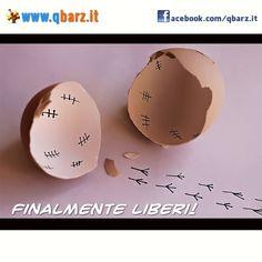 Pulcino scappa dall'uovo - Foto divertente