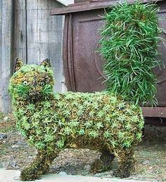 Fancy Cat Topiary--just plant any small-leaved ivy at the base of this moss-filled topiary frame, and grow your own spectacular cat topiary!