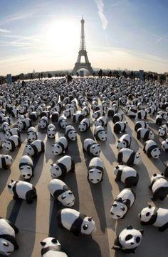 Pandas in Paris