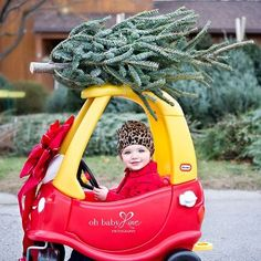 Christmas Tree Lot Perfection by Oh Baby Love Photography