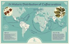 Exploring Coffee's Past To Rescue Its Future : The Salt : NPR
