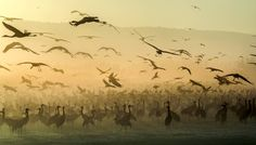 Israeli photographer Gal Gross's entry in the 2017 Sony World Photography Awards World Photography, Photography Awards, Bird In A Cage, Photos 2016, Free Mind, Nature Reserve, Love Birds, Nature Photos, Animals Beautiful