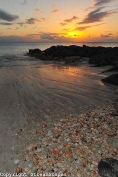 Seashells in Jolly Beach Sunset