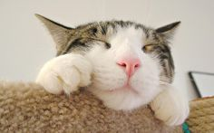 Best Funny video Cats Top Funny  Vines 2015 - https://memeyourfriends.com/best-funny-video-cats-top-funny-vines-2015/
