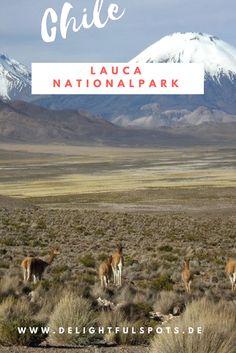 Chile Reisebericht: Über meinen Ausflug in den Lauca Nationalpark im Norden des Landes an der Grenze zu Bolivien.