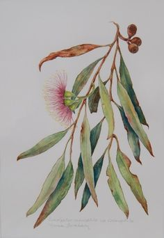 Win a wonderful piece of original botanical art Australian Wildflowers, Australian Native Flowers, Watercolor Leaves, Floral Watercolor, Watercolour, Botanical Drawings, Botanical Prints, Leaf Art, Painting Inspiration