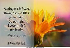 Nechajte rásť vaše slová, nie váš hlas. Je to dážď, čo pomáha kvetom rásť, nie búrka.Neznámy autor Motto, Life, Author, Mottos