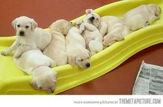 puppy slide :) LOOK AT THE PUPPIES!! They're so floppy!