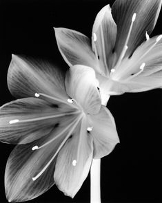 I love flowers in black & white photography
