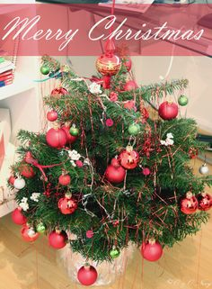 Merry Christmas! ♡ ♡ ♡