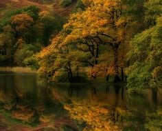 30 Beautiful and Breathtaking Colorful Autumn Photographs - Autumn is the season of mists and smooth fruitfulness. The colorful fall plants or leaves presently create the natural world more gorgeous. Beautiful World, Beautiful Places, Whitetail Deer Pictures, Awsome Pictures, Walk In The Woods, Gods Creation, Amazing Nature, Landscape Photography, Photo Galleries
