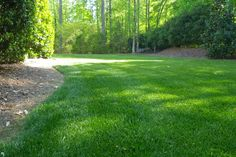 Fine Fescue Grass for Lawns. The fine fescues are among the most complex groups of turfgrass species, comprising at least five different types. Hard fescue,