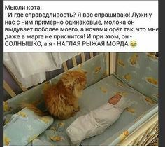 Clever Quotes, Funny Quotes, Funny Cats, Funny Animals, Hahaha Hahaha, Russian Humor, Cat Tattoo, Powerful Words, Laughter