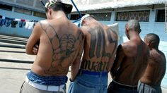 MS-13 gang memebrs say President Trump's immigration rheteroic is making the gang stronger, as immigrants fear to go to the police against MS-13 attacks.