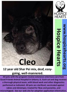 CLEO is available for adoption from Hospice Hearts #Urbana #IL www.hospicehearts.org Her BIO is here: https://www.petfinder.com/petdetail/34803634 Please share, thanks.  PINNED 4/2/16