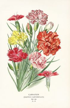Edward Step Favourite Flowers Botanical Prints 1896