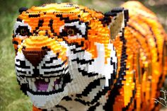 A LEGO tiger at Animals Assembled exhibit at the Houston Zoo. Great big Lego animals made of thousands of Legos, wow!