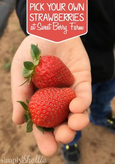 Springtime is the perfect time to pick your own strawberries at Sweet Berry Farm. Here are our tips for a perfect visit.