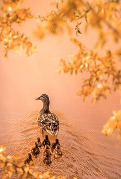 Tender Date Site - love Autumn Forest, Car Shop, Christmas Shopping, Real Life, Xmas, Bird, Dating Relationship, Animals, Peach